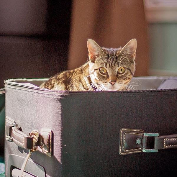 Einreisebestimmungen für Tier
