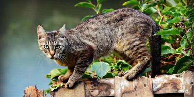 Hausbesuche bei Haustieren