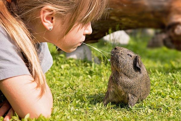 Verhaltensberatung bei Meerschweinchen und Kaninchen