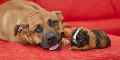 Verhaltensberatung bei Katzen und Hunde