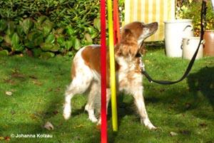 Anwendungsgebiete bei Hunden