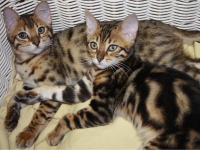 Verhaltensberatung bei Katzen