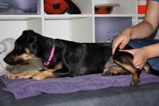 Massagebei Hunden und Katzen