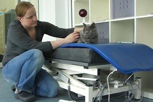 Magnetfeldtherapie bei Katzen