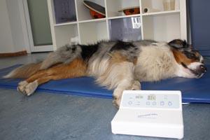 Magnetfeldtherapie bei Hunden