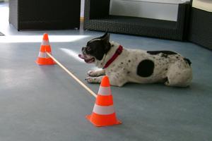 Hund während der Physiotherapie