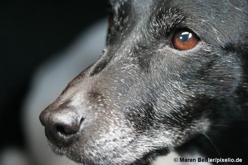 Hundesenioren - mobil bis ins hohe Alter
