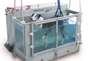 Hund auf dem Unterwasserlaufband